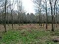 Capite Wood in Wiston, West Sussex.jpg