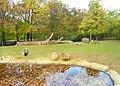 Capybaras, ZOO Brno.jpg