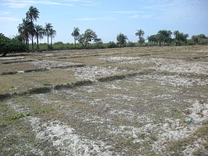 Agriculture in Senegal - A rice paddy near Carabane after the harvest.