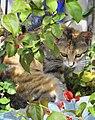 Cat looking on red flower.jpg