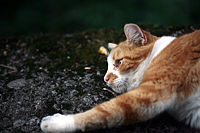 Cat mg 3738.jpg