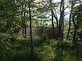 Cecani di sopra nel bosco - panoramio.jpg