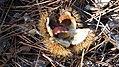 Ceven Peyr MarcJP46 22.jpg
