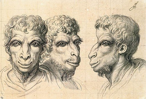 Charles Le Brun - Physiognomic Heads Inspired by a Camel - WGA12557