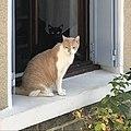 Chats à la fenêtre, quartier Saint-Martin à Miribel (Ain) 2018 (cropped).JPG