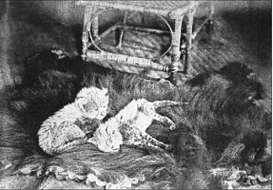Kuno Wildlife Sanctuary - Asiatic cheetah cubs in Dharwar, British India, 1897