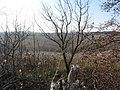 Cherkas'kyi district, Cherkas'ka oblast, Ukraine - panoramio (414).jpg