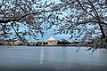 Cherry-trees-evening-dc-tidal-basin - Virginia - ForestWander.jpg