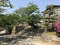 Cherry tree near west entrance of Kintaikyo Bridge.jpg