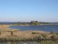 ChesapeakeTidalWetlands.jpg