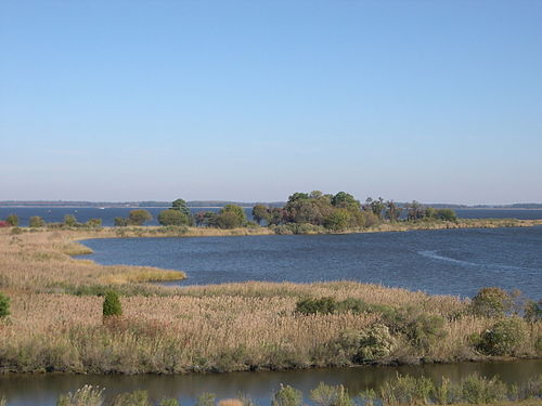 Tidal wetlands of the Chesapeake Bay, the largest estuary in the United States and the largest water feature in Maryland. ChesapeakeTidalWetlands.jpg