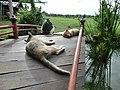 """Chiang Mai """"Sky Adventure"""" - panoramio (3).jpg"""