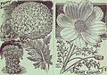 Childs' rare flowers, vegetables and fruits for 1895 (1895) (14594971058).jpg