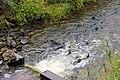 Chinook Salmon Push Their way Upstream to Spawn (15545213445).jpg
