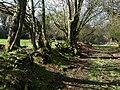 Chudleigh Bridleway 3 - geograph.org.uk - 749247.jpg