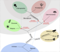 Cladogram chloroplast.png