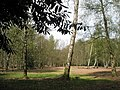Clearing within Fitzhall Plantation - geograph.org.uk - 778709.jpg