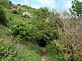 Coast path to Coleton Fishacre - geograph.org.uk - 817586.jpg