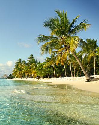Morrocoy National Park - Coconut palm tree in Sombrero cay.