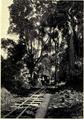 Coffe plantation (My Airships p25).png