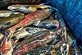 Coleman National Fish Hatchery (30419272076).jpg