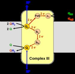 Αποτέλεσμα εικόνας για cytc ubiquinone reductase (complex III)