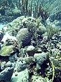 Coral Scene 24 (7157670271).jpg