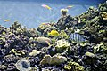 Coral at Moody Gardens (732314842).jpg
