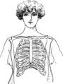 Corset1908 031Fig12.png