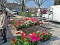 Coustellet - fleurs.jpg