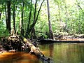 Cove off Edisto River - panoramio.jpg