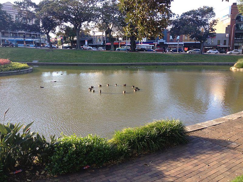 800px-Creepy_Ducks%2C_Victoria_Park_Pond.JPG