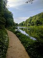 Creswell Gorge, Creswell Craggs, Notts (142).jpg