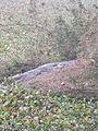 Crocodile BangrWeoogoPark.JPG