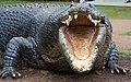Crocodile has a big mouth-01+ (1975570650).jpg