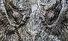 Crocodylus acutus close up 2.jpg