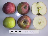 Cross section of Extraordinaire, National Fruit Collection (acc. 1947-357).jpg