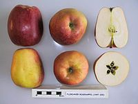 Cross section of Florianer Rosenapfel, National Fruit Collection (acc. 1947-320).jpg