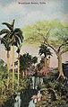Cuba - Woodland scene.jpg