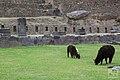 Cusco - Peru (20760247285).jpg