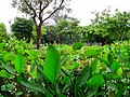 Daan Forest Park 大安森林公園 - panoramio.jpg