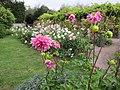 Dahlias in Bussière Garden - panoramio.jpg