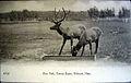 Deer Park Tenney Estate, Methuen.jpg
