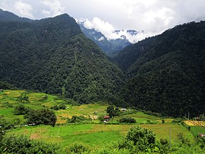 Eastern Himalayan broadleaf forests - Broadleaf forests in Jigme Dorji National Park, Bhutan