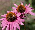 Denver Botanic Gardens (3855014548).jpg