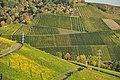Der Hang des Götzenbergs - Wein- und Obstbaulandschaft bei Stuttgart-Uhlbach im Herbst.jpg