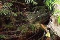 Detail from Bonshaw Trail, PEI (spider web) (220517530).jpg
