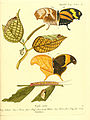 Die ausländischen Schmetterlinge in Abbildungen nach der Natur (Tab. LIV) (6012549134).jpg