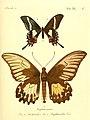 Die ausländischen Schmetterlinge in Abbildungen nach der Natur (Tab. XL. C) (6011998017).jpg