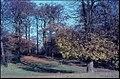 Diederichsenpark im Herbst (Kiel 39.334).jpg